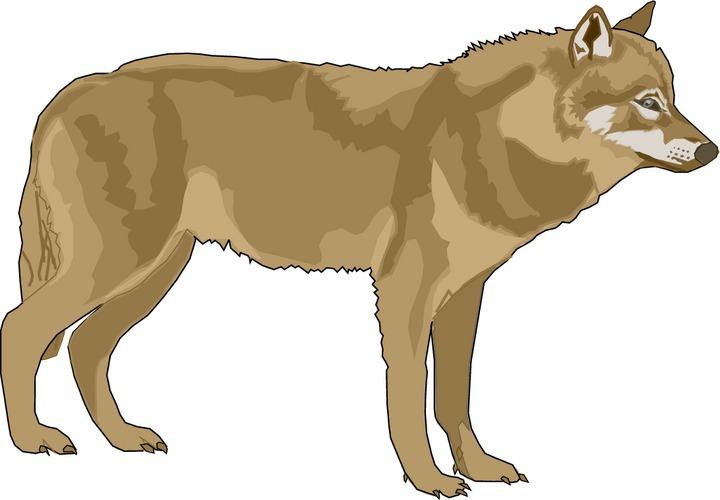 Clip art wolves.