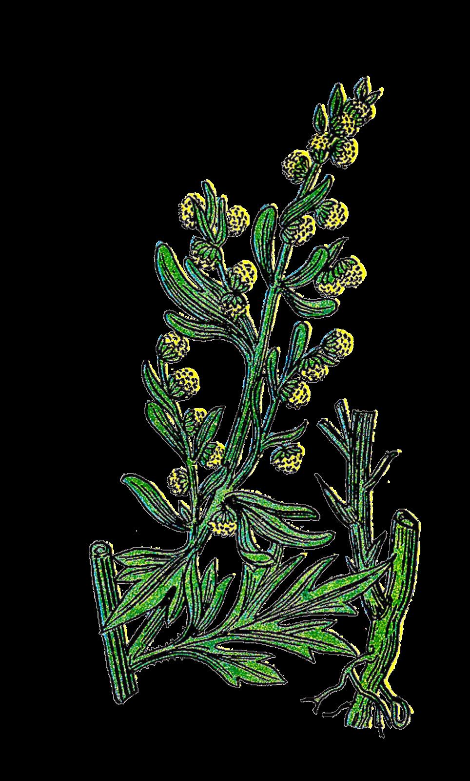 Vintage Herb Clipart.