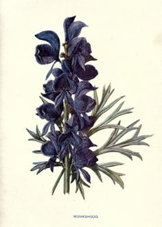 monkshood Wolves bane Every part is poisonous Means: beware; a.