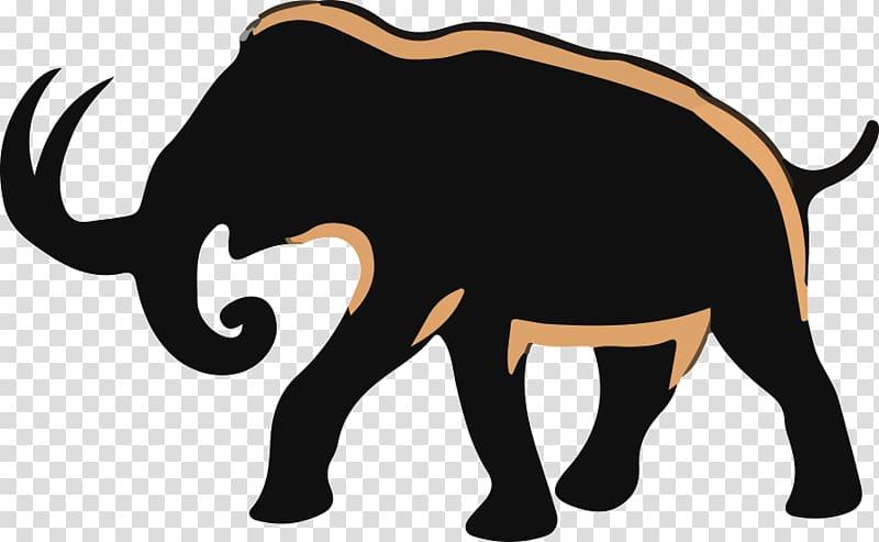 African elephant Indian elephant Woolly mammoth Extinction.