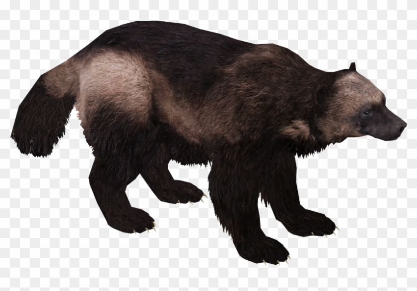 Wolverine Animal Png, Transparent Png.