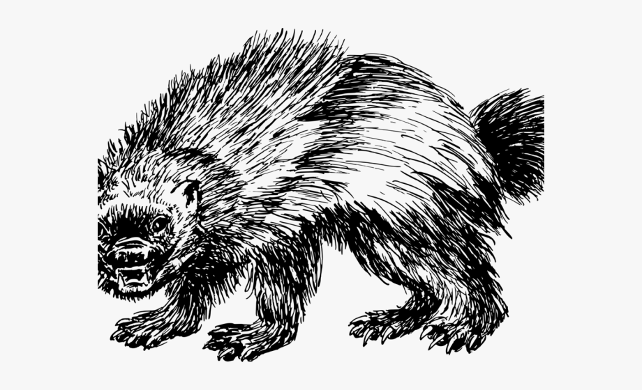 Animal Clipart Wolverine.