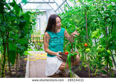Farmer Using Organic Crop Protection Agent Stock Photo 75912691.