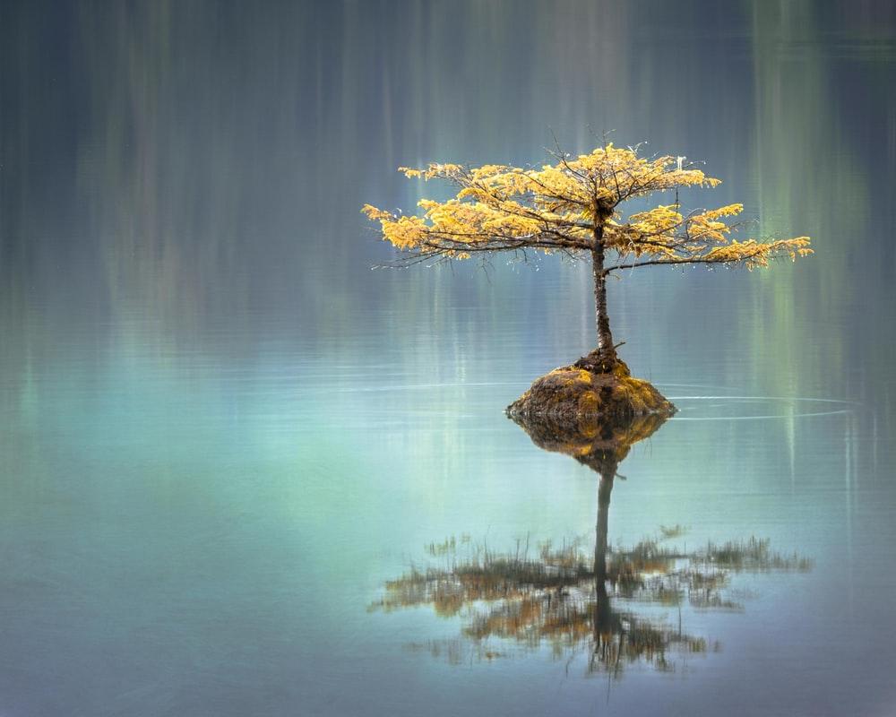 Best 100+ Zen Pictures.