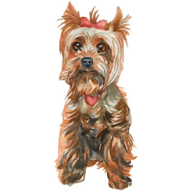 The Yorkshire Terrier Puppy Girl Brush Effect, Cards, Dog.