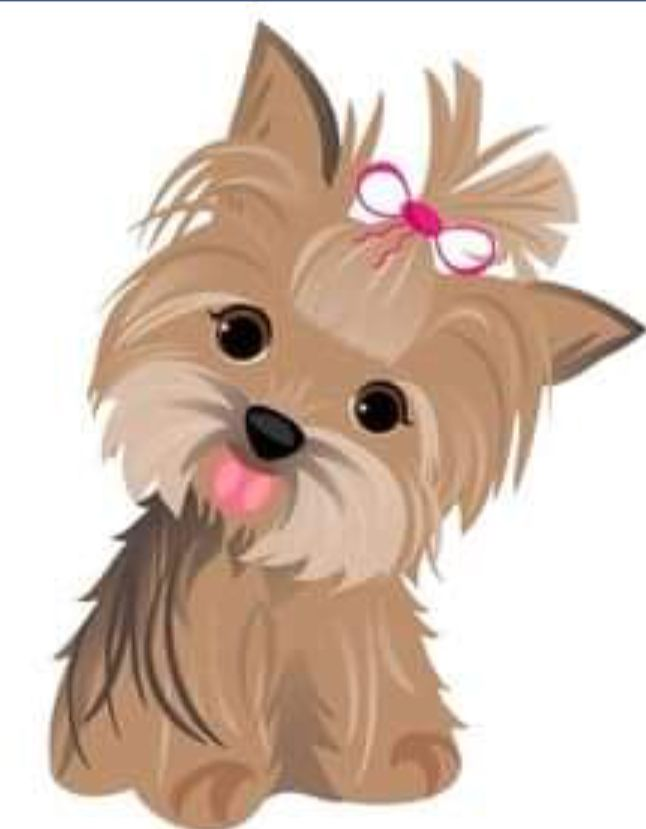 Pin by Michael Reilly on Yorkies.