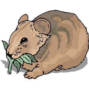 Wombat Clip Art.