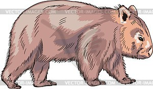 wombat clipart #6.