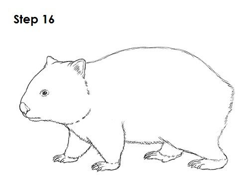 Wombat Drawing 16.
