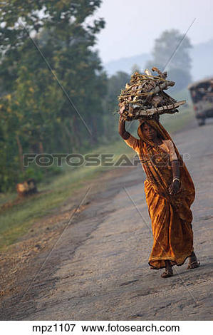 Picture of Woman carrying wood over her head, India mpz1107.