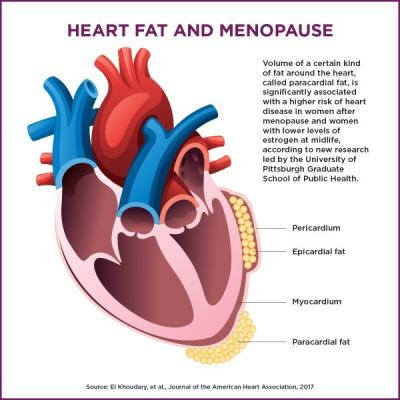 Hormone Therapy Linked to Heart Fat, Hard Arteries.
