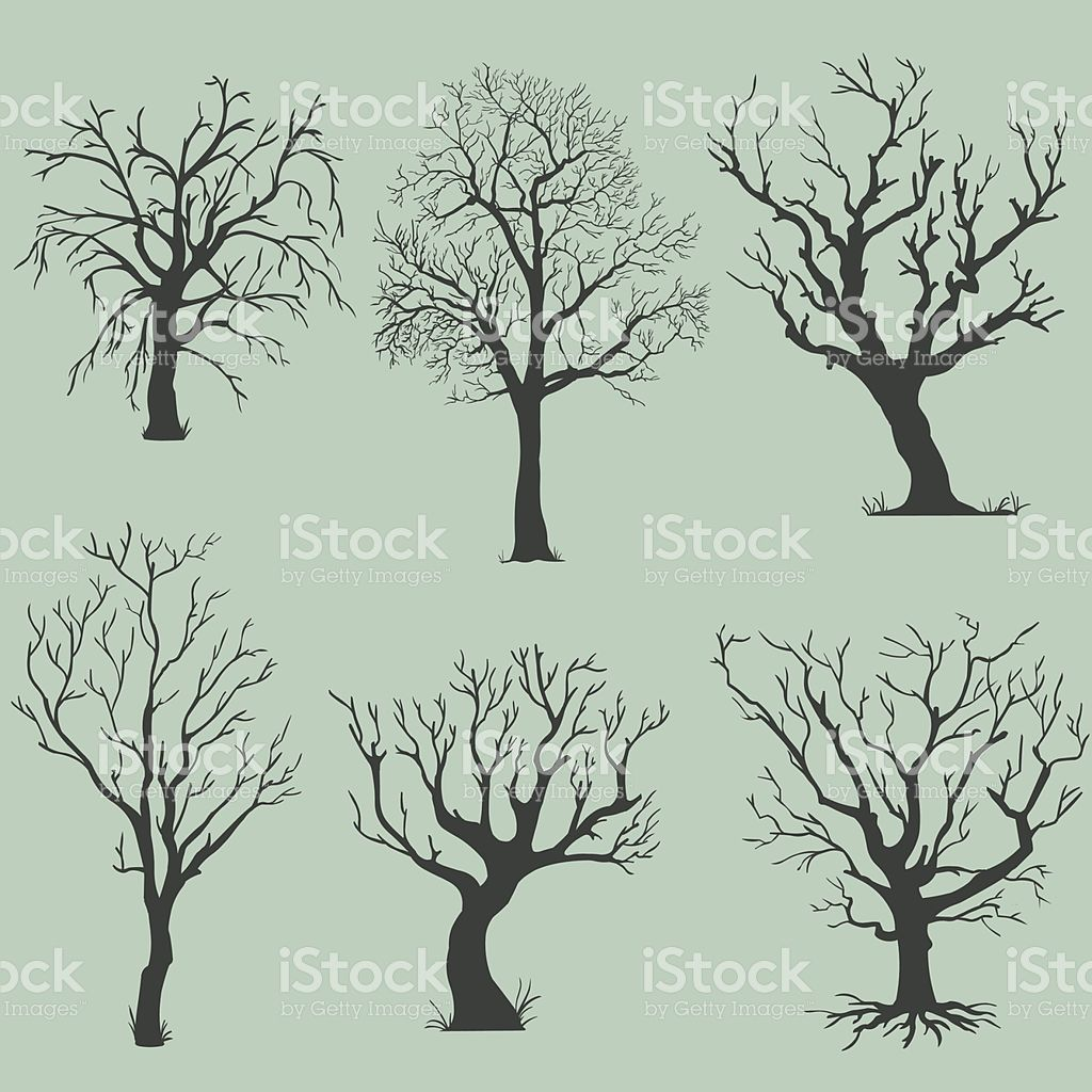 vector set of silhouettes bare trees in 2019.