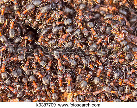 Stock Photograph of Red Ant colony k9387709.