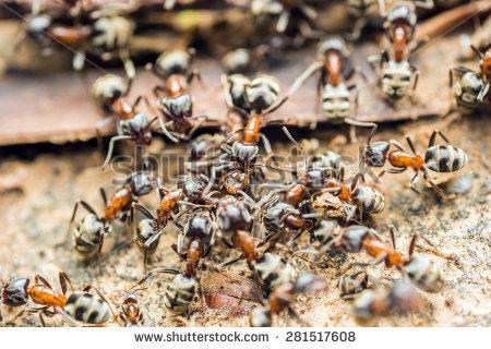 Ant Colony Stock Photos, Royalty.