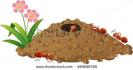 Ant Stock Photos, Royalty.