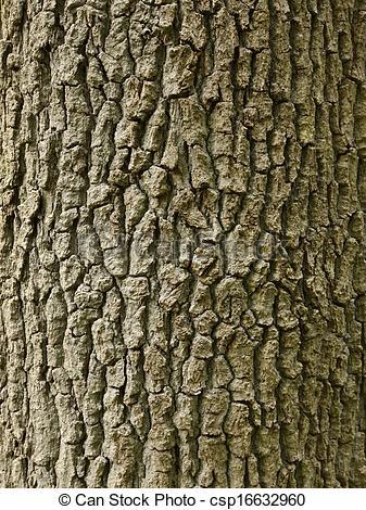 Stock Image of Oak Bark Wallpaper.