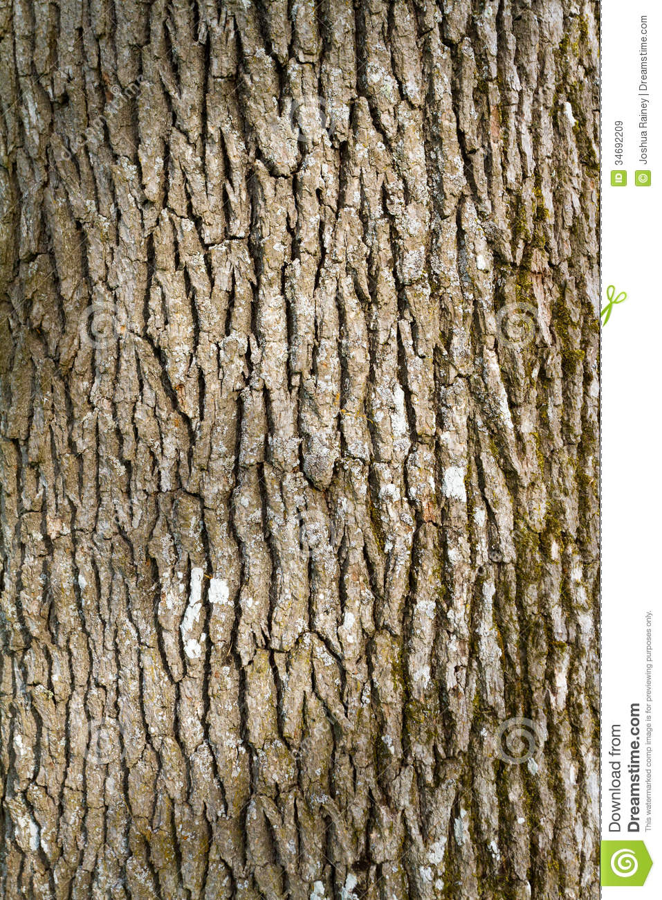 Tree Bark Abstract Royalty Free Stock Images.