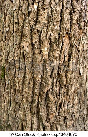 Picture of Zhangshu Tree bark texture.