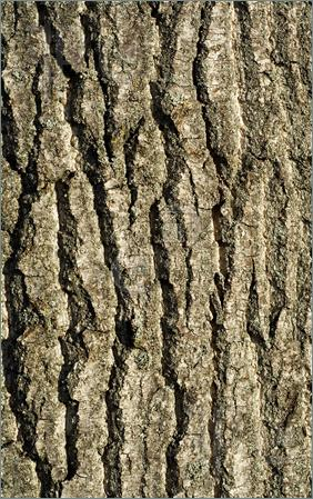 Clipart tree bark.
