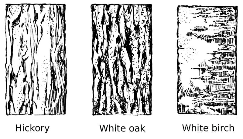 Tree Bark types.