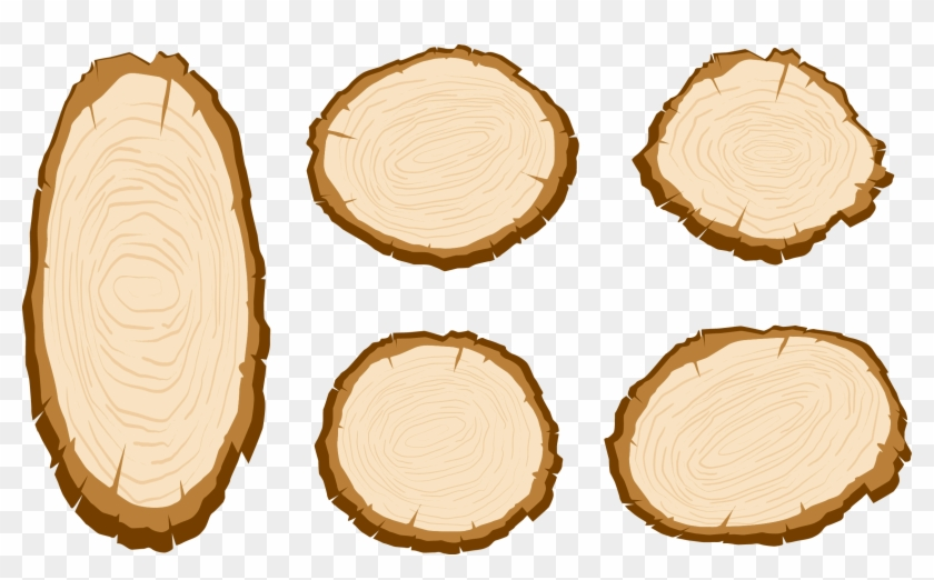 Wood Aastarxf Ngad Tree Vector Painted Sliced.