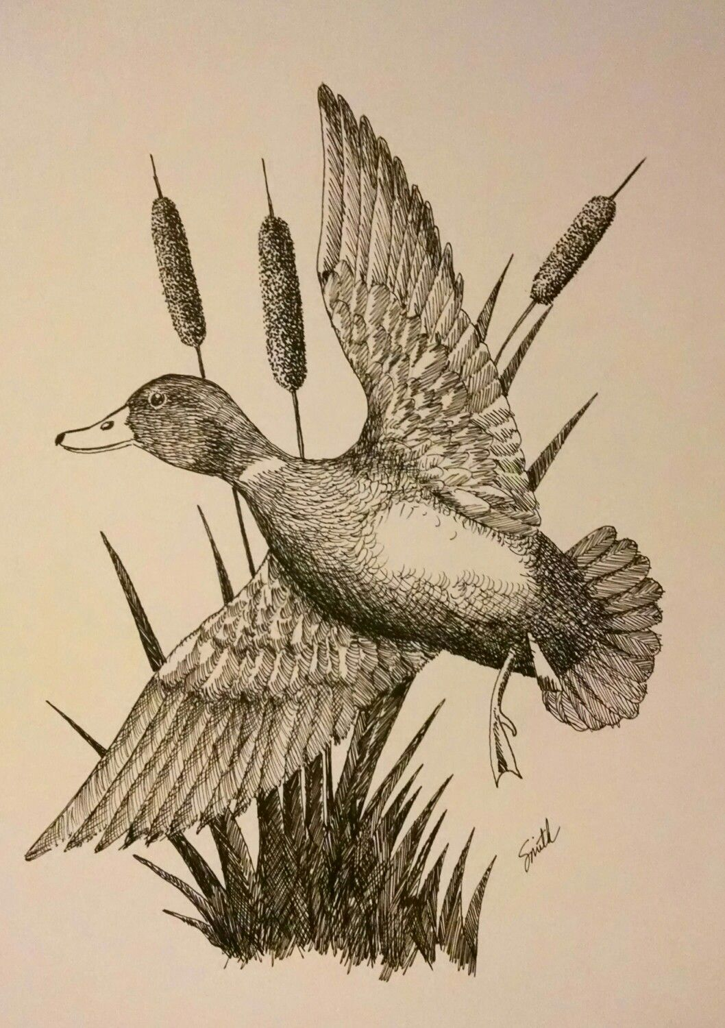 Drake Mallard Duck illustration in pen & ink. in 2019.