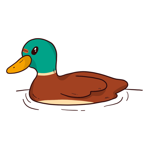 Cute drake duck wild duck beak water swimming flat.