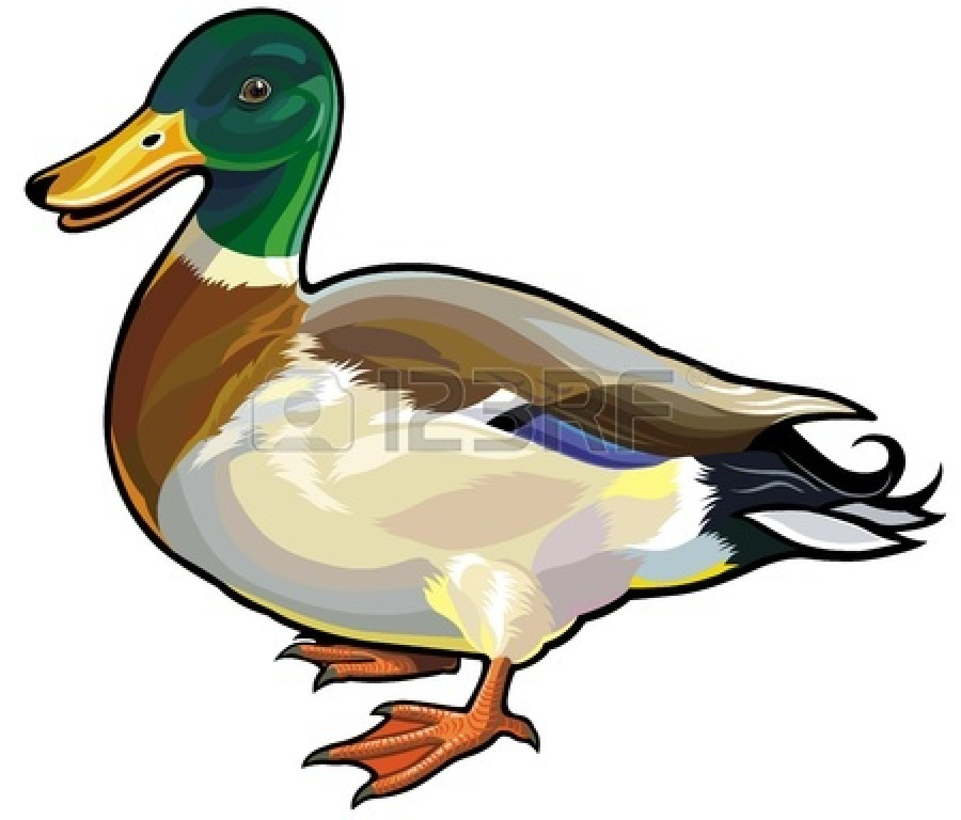 Mallard Duck Cartoon Clipart.