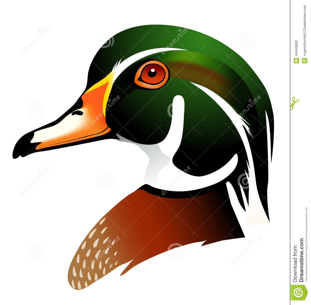 Vector Illustration Of Wood Duck Stock Vector.
