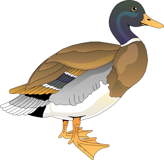 Wood duck clipart.