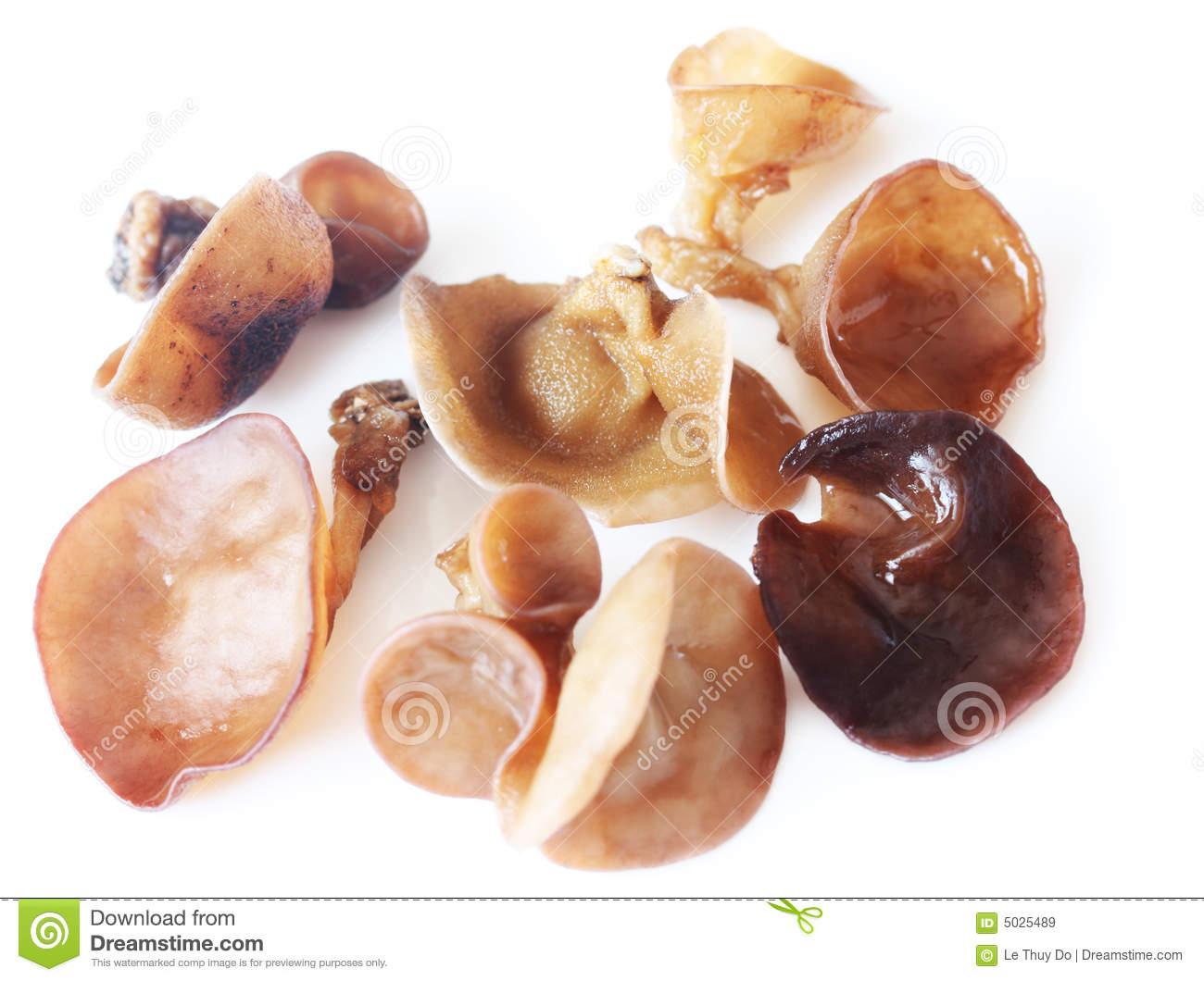 Wood Ear Mushrooms Royalty Free Stock Images.
