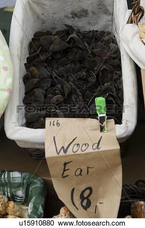 Stock Photography of Wood ear Mushrooms at Calabasas California.