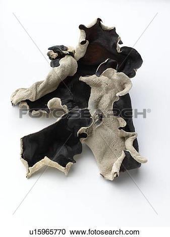 Stock Photography of Wood Ear Mushrooms u15965770.