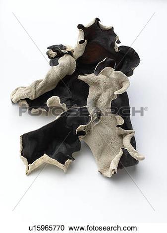 Stock Photography of Wood Ear Mushrooms u15965770.