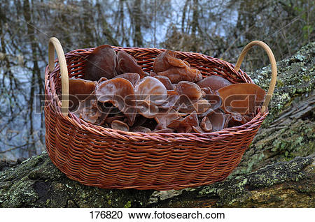 Stock Photography of Wood Ear Fungus, Ear Fungus, Mu.