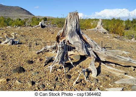 Stock Photo of Soil erosion csp1364462.