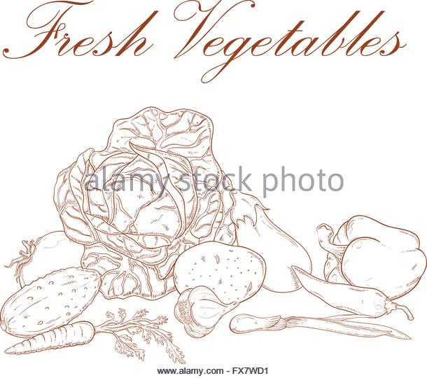 Wood Garlic Stock Vector Images.