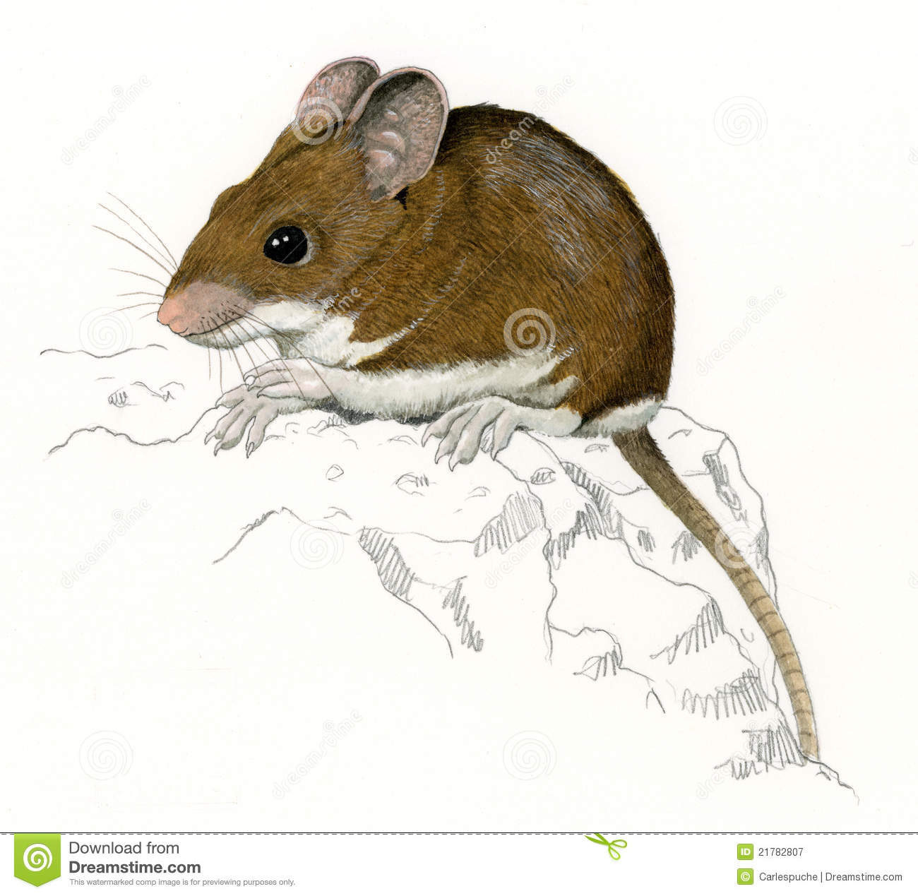 Wood Mouse On A Rock (Apodemus Sylvaticus) Royalty Free Stock.