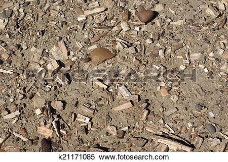 Stock Image of Petrified wood in Patagonia k21171085.