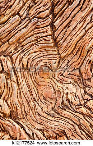 Stock Photo of Petrified wood k12177524.