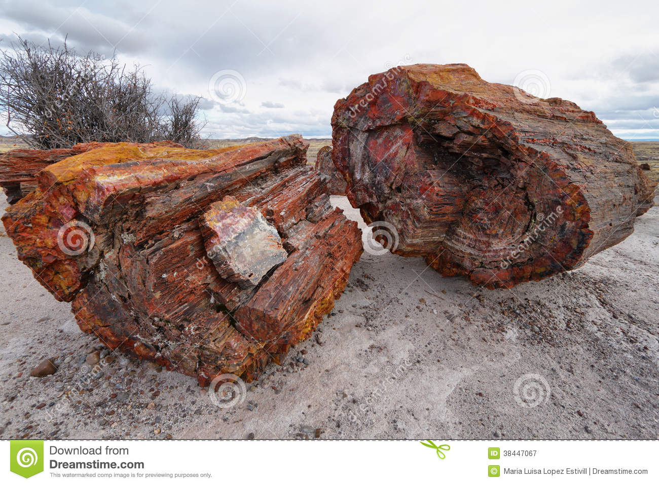 Petrified Wood Of Triassic Period In Petrified Forest Royalty Free.