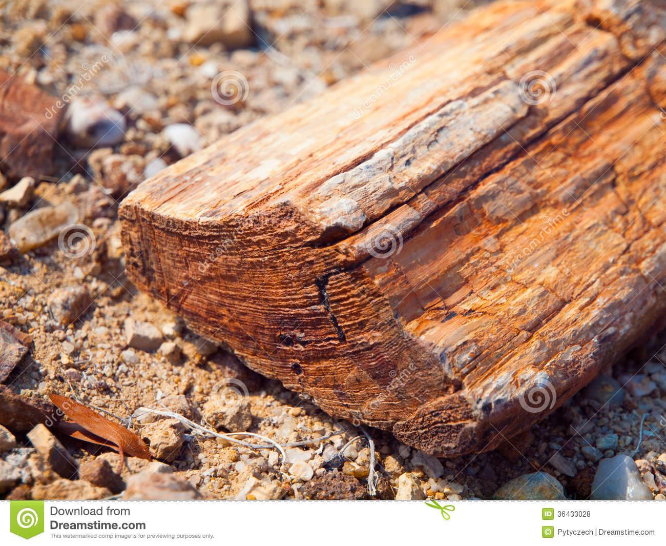 A Piece Of Petrified Wood Royalty Free Stock Photos.