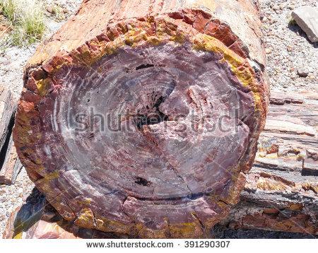 Petrified Wood Stock Photos, Royalty.