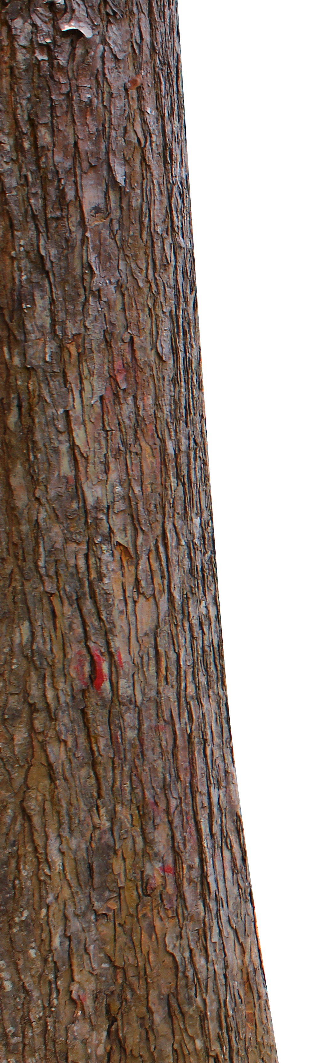 PNG Tree Trunk Transparent Tree Trunk.PNG Images..
