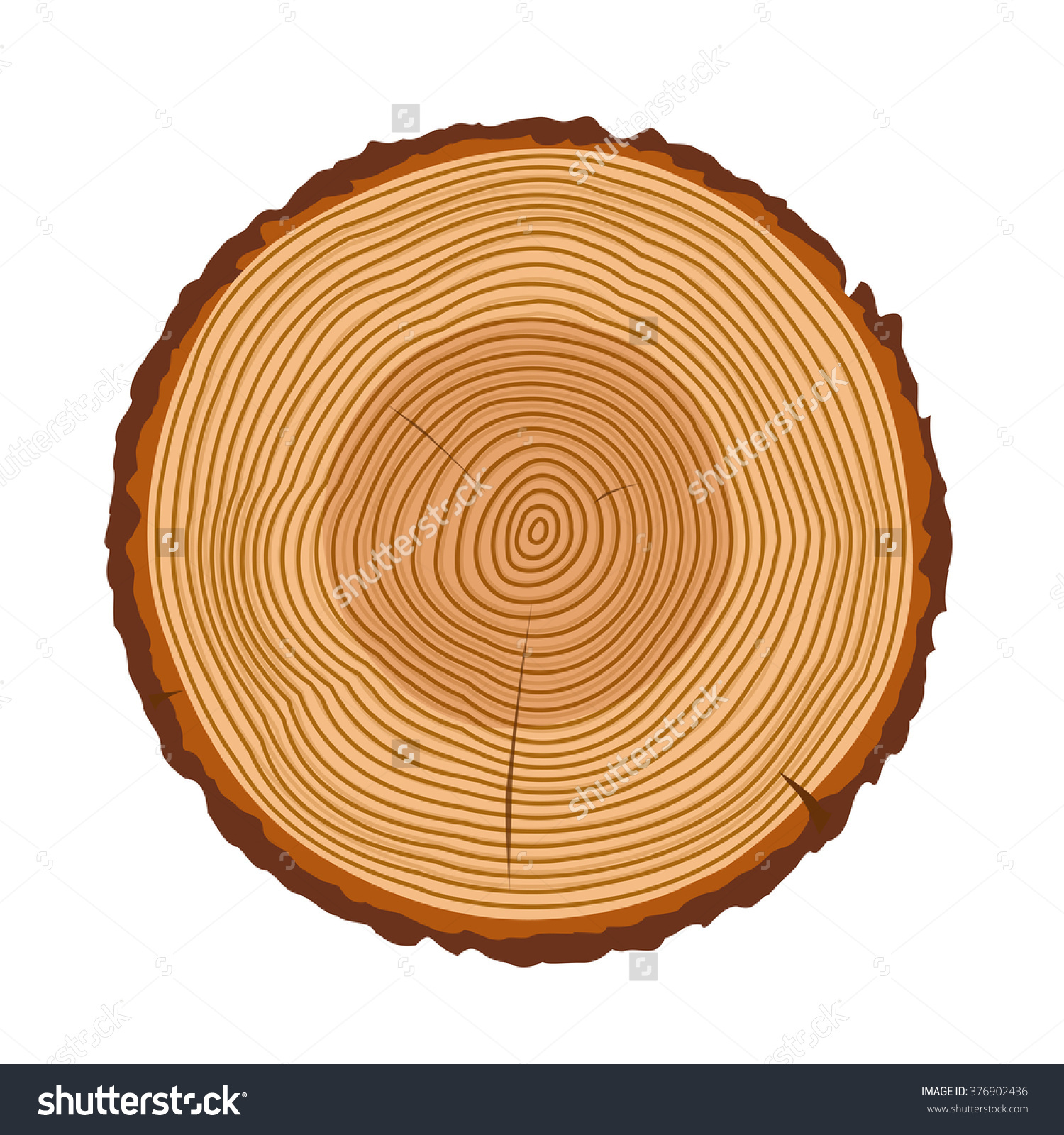 Tree Rings Tree Trunk Rings Isolated Stock Vector 376902436.