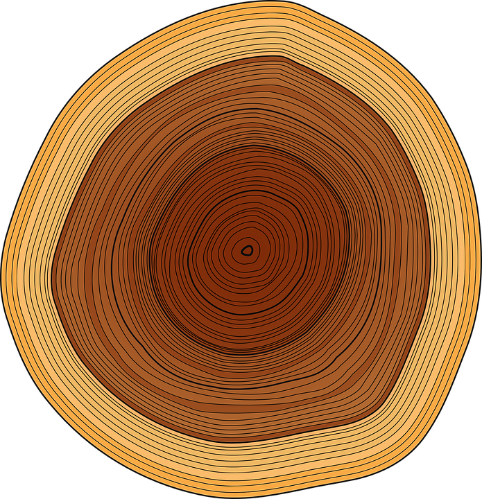Free vector graphic: Annual Rings, Trunk, Tree, Rings.