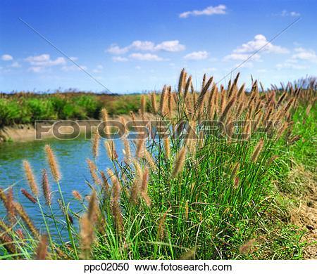 Stock Photography of river, riverside, river embankment, levee.