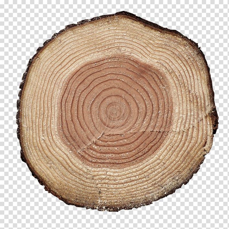 Round beige natural wood slab, Aastarxf5ngad Wood Tree Adobe.
