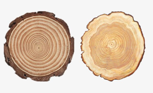 Rubber Wood Round Wood Material PNG, Clipart, Material.