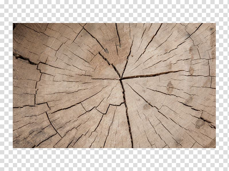 Wood Tree , Broken wood ring maps transparent background PNG.